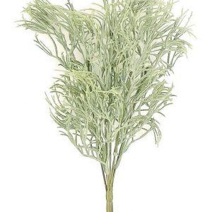 Needle Juniper gray-green