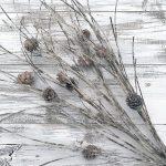 """Glittery Birch Twig Bundle - 34"""""""