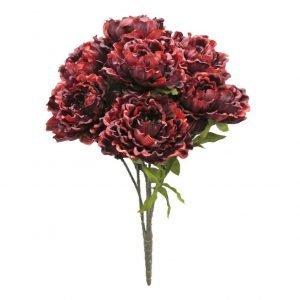 Burgundy Red Peony Bush