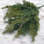 "Two-Toned Cedar Bush x 7 - 18"""